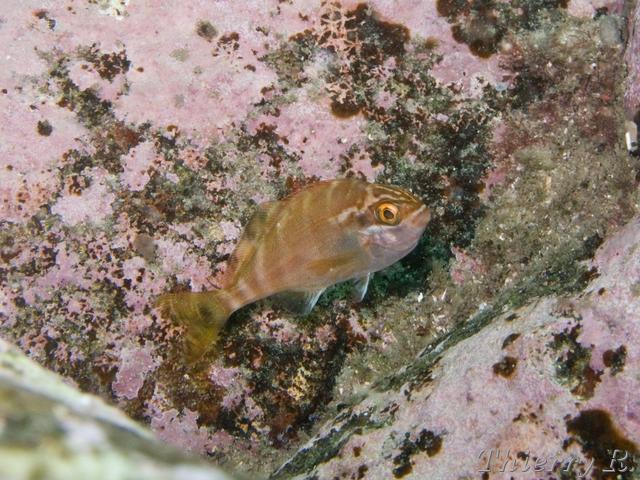 Scuba Diving Photos - Photos de Plongée
